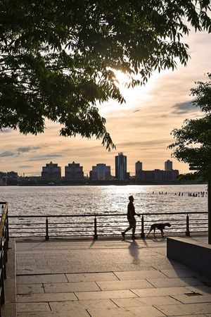 Sunset_collection Sunset Hudson River Hudson River Greenway Sky Water Tree Nature Architecture Built Structure One Person Silhouette Real People Building Exterior Men Leisure Activity Sunset City Lifestyles Outdoors