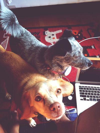 Puppies make life better