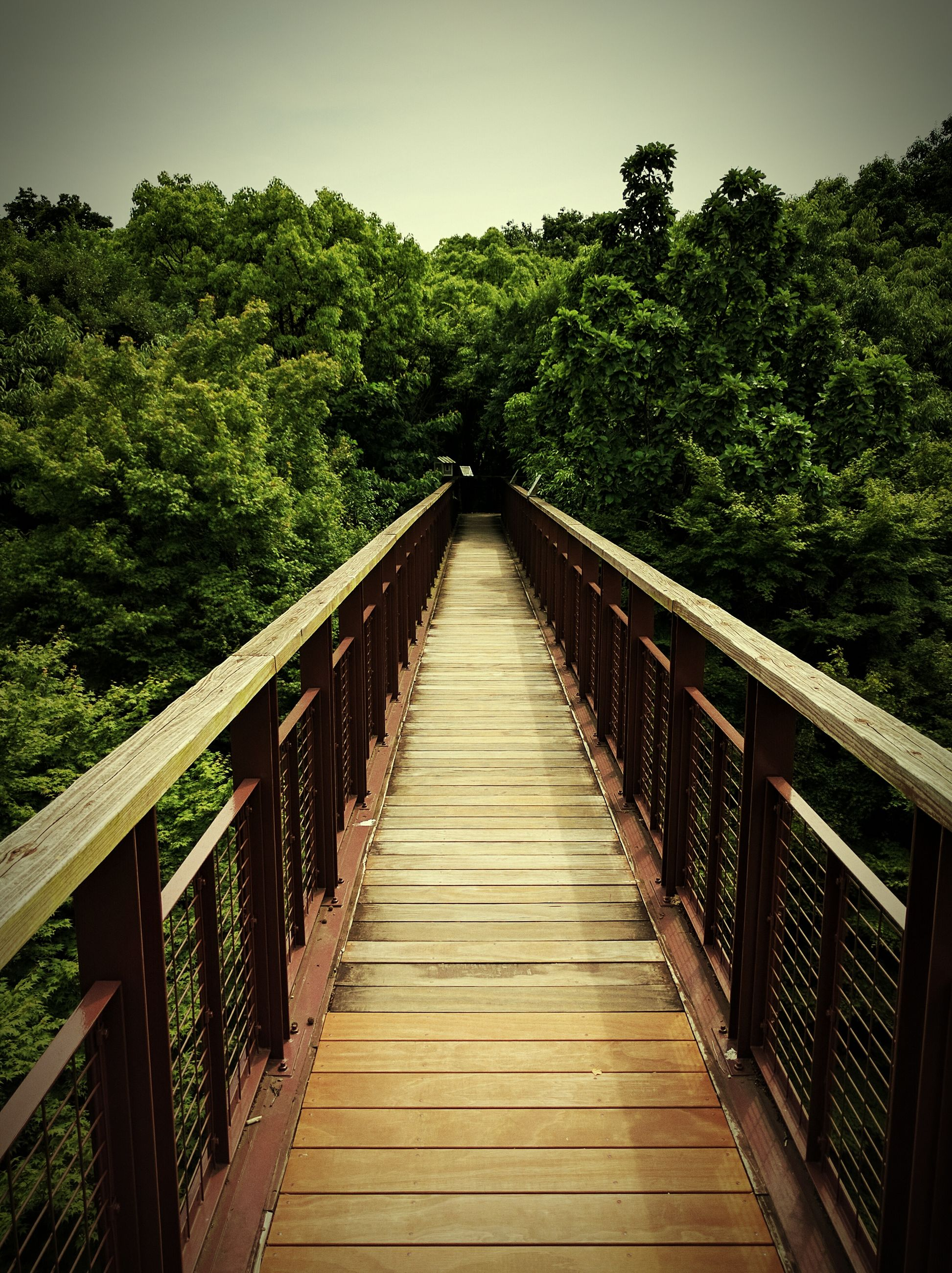 tree, the way forward, connection, footbridge, built structure, bridge - man made structure, diminishing perspective, growth, tranquility, bridge, vanishing point, nature, tranquil scene, day, long, no people, outdoors, green color, plant, sky, beauty in nature, lush foliage, narrow, walkway, scenics, non-urban scene, green, landscape