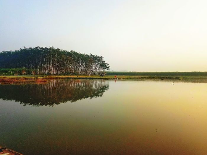 Water Tree Lake Symmetry Reflection Sky Reflection Lake Farmland Reflecting Pool Mausoleum Agricultural Field Standing Water Terraced Field Idyllic Cultivated Land Tranquil Scene Rice Paddy Lakeshore