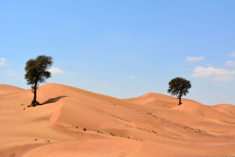 United Arab Emirates Dubai Dubaidesert VAE Wüste  Dunes Nature Beauty In Nature Red Nowater Sand Dune Tree Desert Arid Climate Sand Accidents And Disasters Heat - Temperature Drought Blue Summer Date Palm Tree Camel Dry Horizon Over Land Single Tree Arid Landscape Dried Plant Wilted Plant
