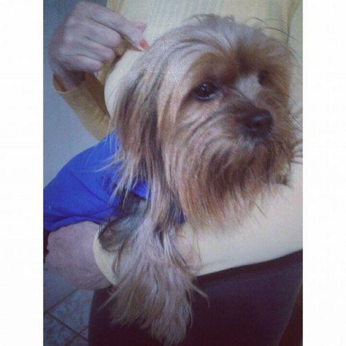 Banhotomado Gatu Doglindo *@* max ♥♡♡