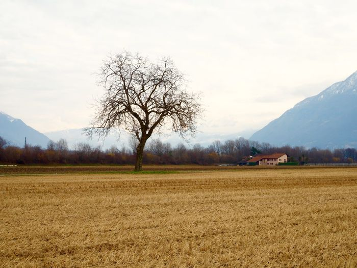 Day Farm Field Mountains No People Tree Wheat Wheat Field Winter Betterlandscapes