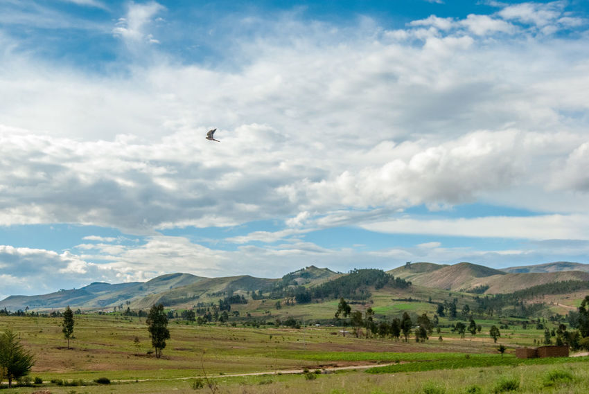 Bolivian Landscape Bolivia Animal Themes Animals In The Wild Beauty In Nature Bird Cloud - Sky Day Field Flying Grass Landscape Mountain Nature No People Outdoors Scenics Sky Torotoro Tree