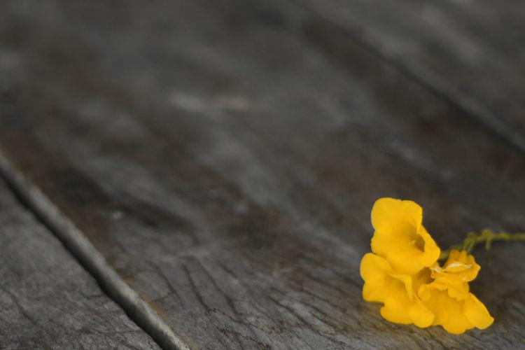 Yellow Wood -