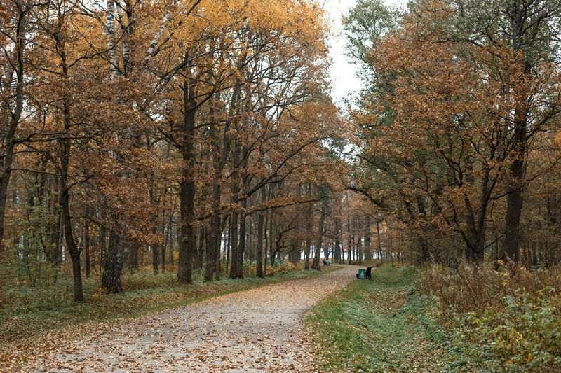 Tree Autumn Plant Change Direction Footpath The Way Forward Nature Forest Leaf Plant Part Land Road Tranquility Day Park Landscape Outdoors Scenics - Nature Treelined Diminishing Perspective WoodLand Leaves