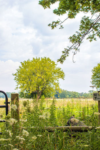 Field gate Field Gate Beauty In Nature Cloud - Sky Day Field Fields Of Gold Grass Green Color Growth Landscape Michigan Outdoors Nature No People Outdoors Scenics Sky Tranquil Scene Tranquility Tree