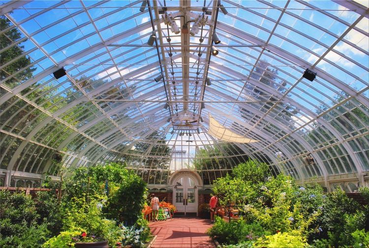 A busy greenhouse on a pristine summer day. 🌞🌿💐 Greenhouse Summer Vibrant Color Clear Sky Warmth Plant Indoors  Roof Afternoon Plant Nursery Nature Sky Walking Around Textures And Surfaces Relaxing Taking Photos Flower Warmthandsunshine Plant Tranquility