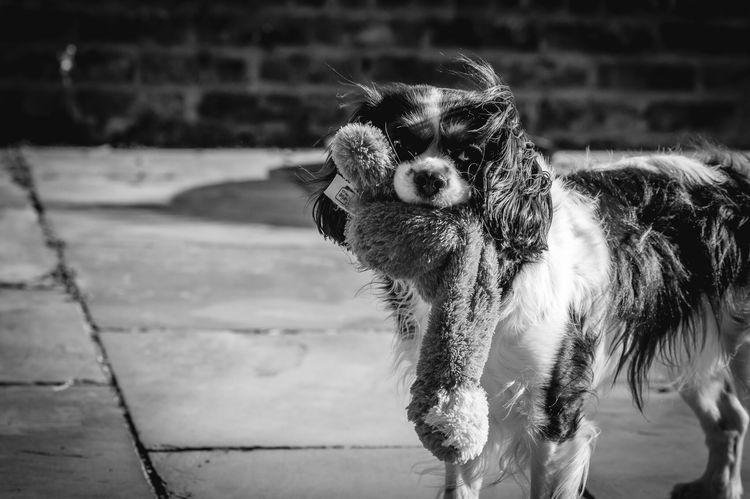 Blackandwhite Photography , Lovely , Dogs , Nature , Nikon Macro