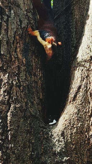 Moment Captures EyeEm Nature Lover Squirrel