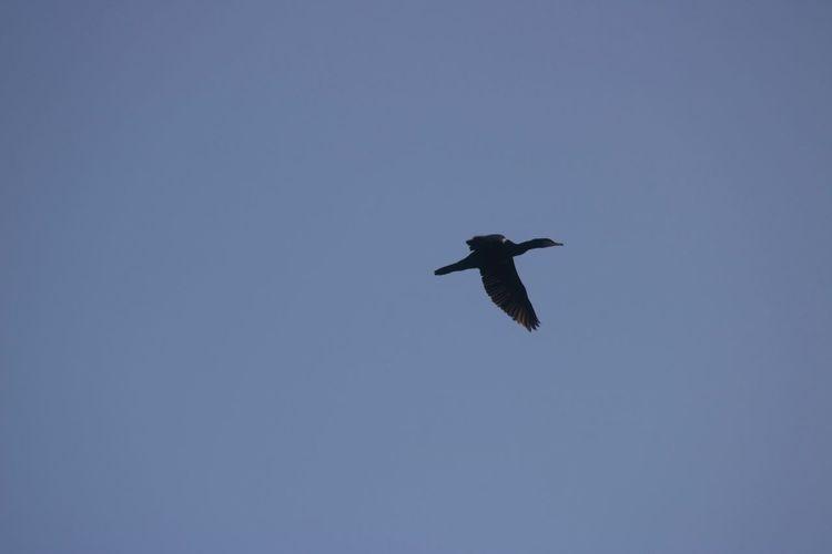 Bird in a Blue