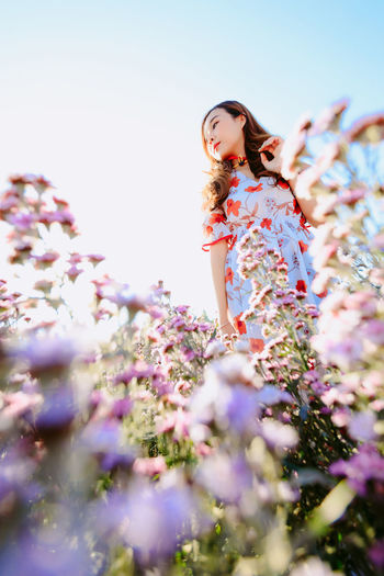 Beautiful pretty woman in a margaret aster flowers fields at chiang mai, thailand