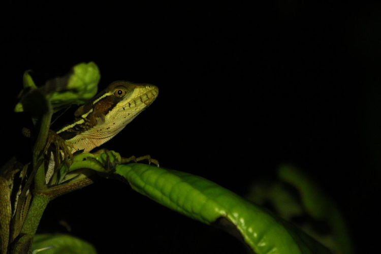 Costa Rica Tree Animal Wildlife Animals In The Wild Beauty In Nature Bird Freeky Lizard Nature Night No People One Animal Reptile Tucan