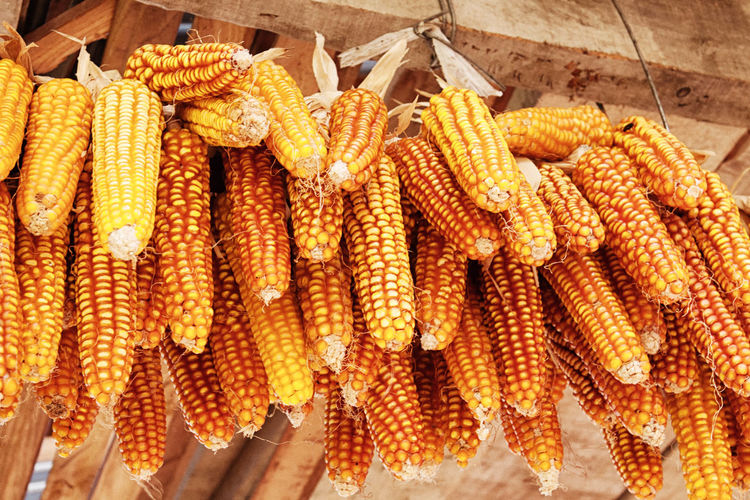 Low Angle View Of Corns Hanging For Sale At Market