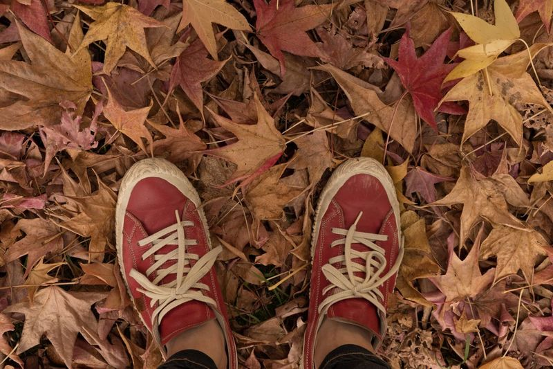 Beauty In Nature Shoe Standing Leaf Autumn Japan Eye Em Nature Lover