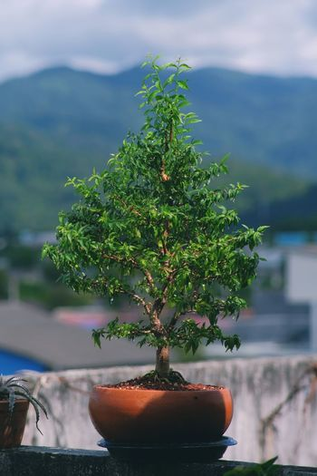 Close-up of small potted plant against tree