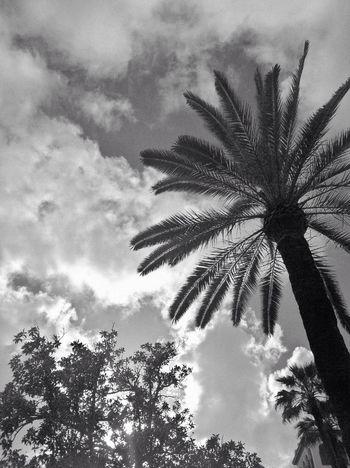 Streetphotography Blackandwhite Beautiful Day Eye4photography