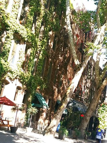Adapted To The City Architecture Tree Building Exterior City Outdoors Nature Puget Sound, Washington Veiwpoint Of A Homeless Seattle Girl Seattle, Washington Green Color Washington State