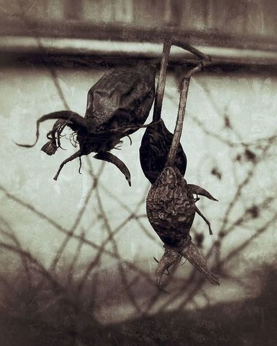 чернобелоефото Blackandwhite Blackandwhitephotography