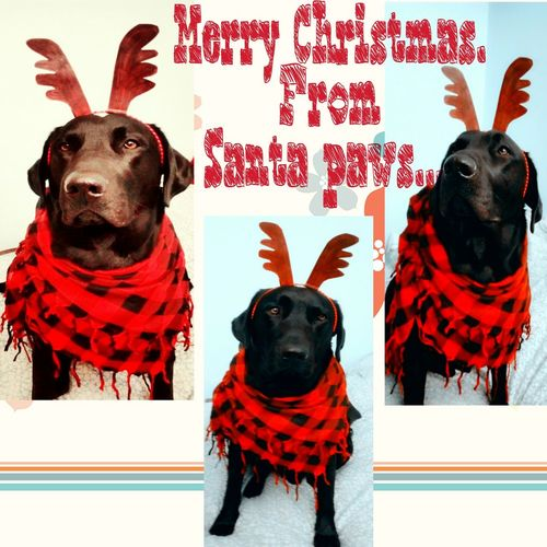 Merry christmas to all 😊😊😊😊😊❄❄⛄⛄💖💗💟 Merry Christmas Doglover My Dogs Are Cooler Than Your Kids Doglovers Xoxo💋💋💋 EyeEm Animal Lover Pets Daily Dogoftheday EyeEm Best Shots Dogs Of EyeEm Pets Corner Love Dogs Dog Love Petsofeyeem My Dog I Love My Dog Awesome_shots Cute Pets First Eyeem Photo Dogslife Dog❤ Winterdogs Wintertime Winter2015 Christmas Around The World