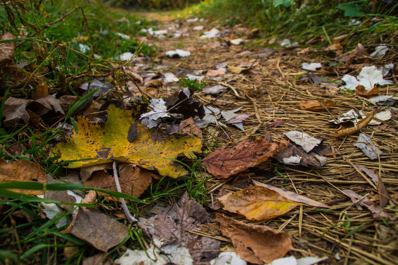 Autumn leaves on the ground Leaf Plant Part Autumn Change Dry Leaves Nature No People Falling Close-up Beauty In Nature Fragility Natural Condition Fall Land Day