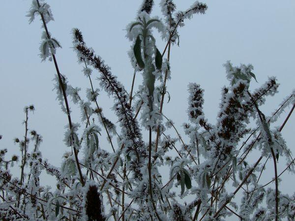 Winter Wonderland Winter_collection My Winter Favorites Bruchmühlbach-Miesau Its Cold Outside Snowminimals White Album WhiteCollection Pattern Pieces