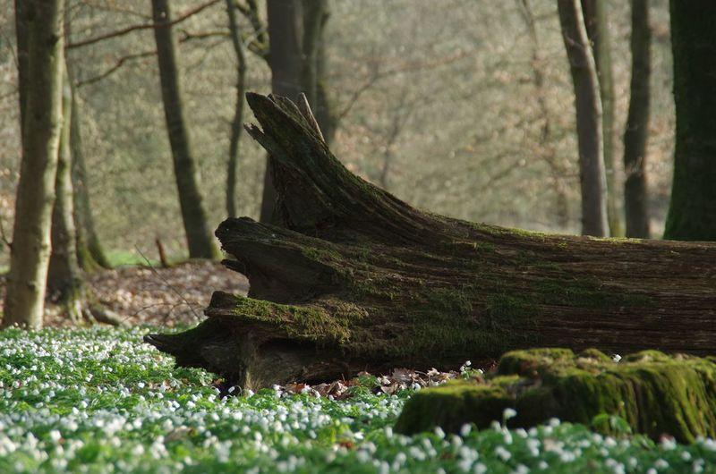 Lizard on tree trunk in forest
