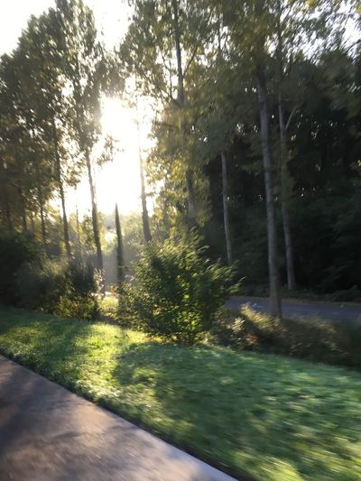 Tree Tranquil Scene Forest Tranquility Growth Sunlight Nature Beauty In Nature Plant Scenics Day Solitude Outdoors Non-urban Scene Green Footpath Lens Flare WoodLand Green Color