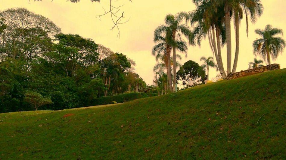 🌱🌱🌱 Landscape Enjoying Life Day Beautiful Nature Popular EyeEm Best Shots The Portraitist - 2015 EyeEm Awards Bestphotos Eye4photography  Brazil Saopaulo Photografyoftheday Green Pure