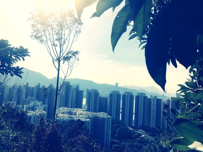 IPhoneography Unseen Hongkong From Mountain To City Tree Growth No People Outdoors Sky Day Architecture Mountain Cityscape