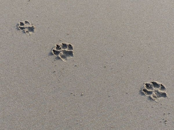 Sand Land Beach High Angle View No People Nature Day Print FootPrint Animal Track Outdoors Paw Print