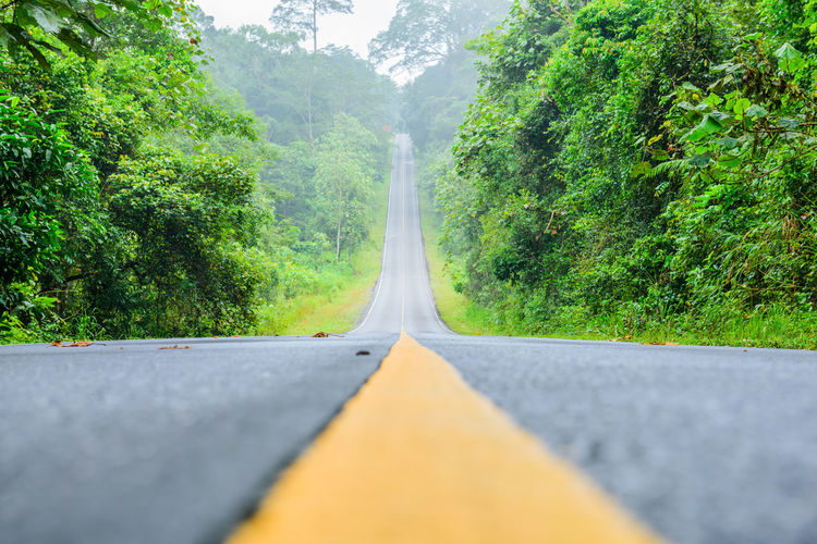 on the road Tree Road Green Color Empty Road Mountain Road Winding Road Dividing Line Asphalt Country Road The Way Forward Road Marking Lush Foliage