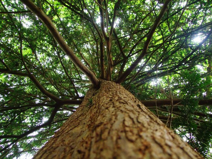 Tree Tree Trunk Low Angle View Growth Nature Forest Outdoors Day Branch Beauty In Nature Tranquility No People Bamboo Grove Climbing Close-up