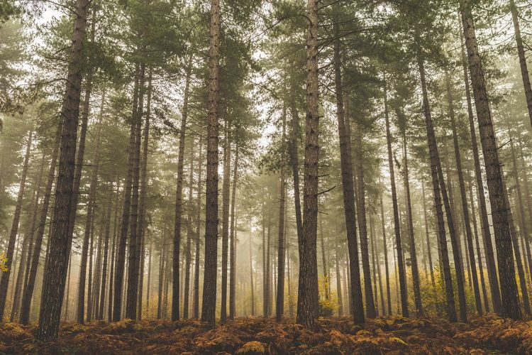 OpenEdit Check This Out Landscape_Collection Landscape EyeEm Best Shots Nature Nature_collection Forest Exploring Fog