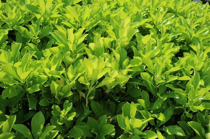 Leaf Green Color Nature Backgrounds Full Frame Freshness No People