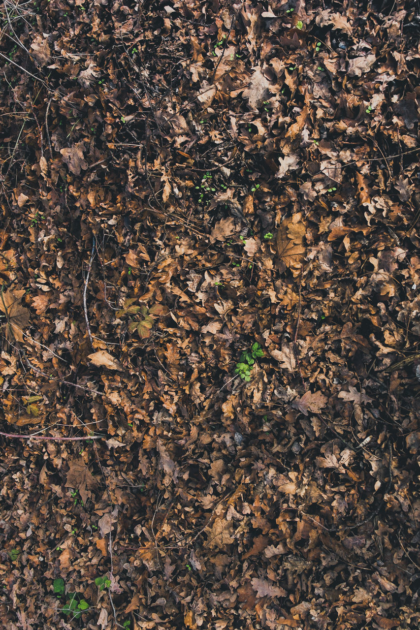 leaf, plant part, full frame, nature, no people, day, backgrounds, close-up, dry, land, plant, high angle view, brown, growth, field, outdoors, beauty in nature, forest, tree, vulnerability, leaves