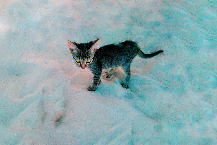 Cat Cold Temperature Domestic Domestic Animals Domestic Cat Feline High Angle View Looking At Camera Mammal Nature No People One Animal Pets Snow Vertebrate Whisker Winter