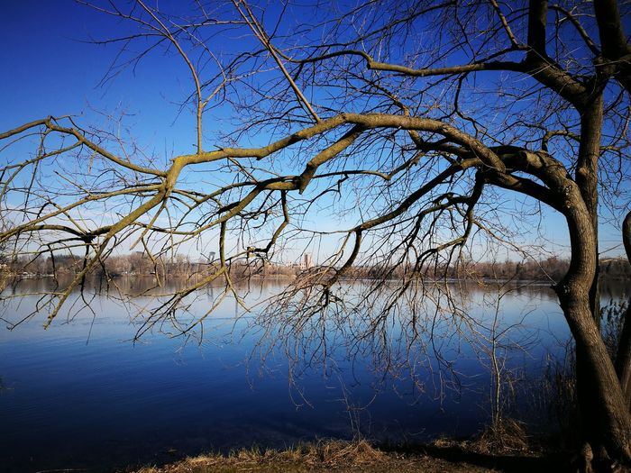 Mantova River Water Tree Branches Branches And Sky Branches And Water Looks Scary Sky