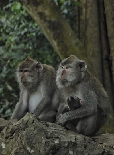 Monkey family against tree in forest