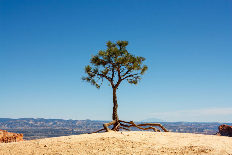 Tree on mountain against blue sky