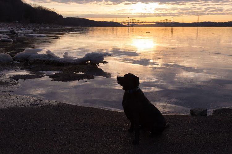 Dog standing in lake during sunset