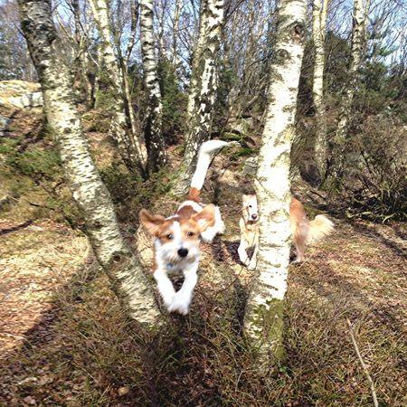 Dog Taking Photos Tree Enjoying Life Eye4photography