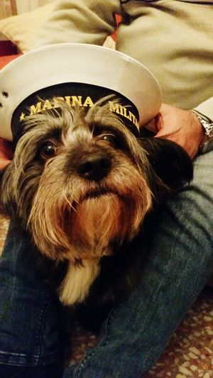 Pets Dog My Dog Cappellino Marina Militare Italiana Domestic Animals Bimbocurioso