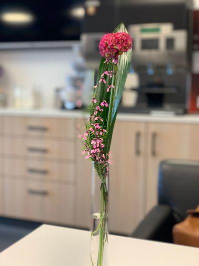 Flower Flowering Plant Plant Focus On Foreground Indoors  Vase Decoration