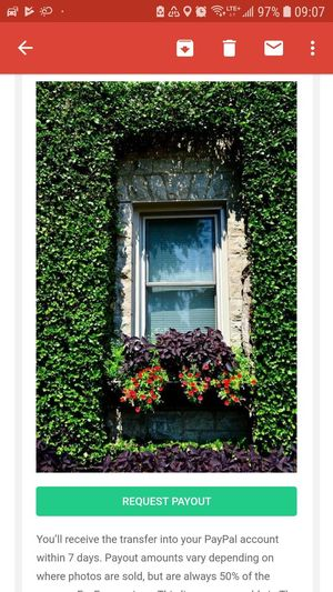 Sold 😁😁😁. Thank you EyeEm. Flower Window Box Window Ivy Plant Building Exterior Architecture Close-up Built Structure
