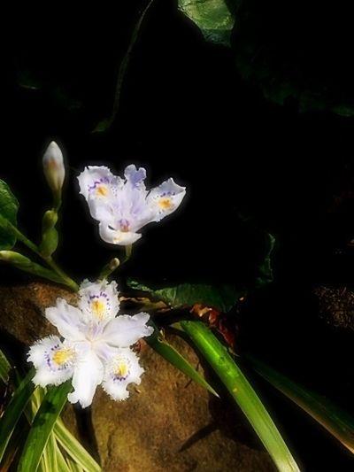 Bonjour!  Vive Bon Travail! Petite Fleur