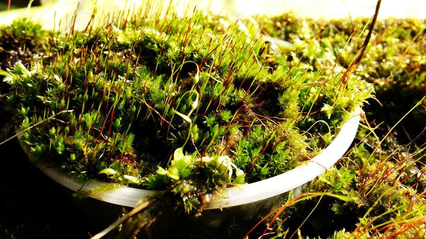 Moss Beauty In Nature Close-up Day Field Freshness Green Color Growth Moss Mossporn Nature Outdoors Plant Selective Focus