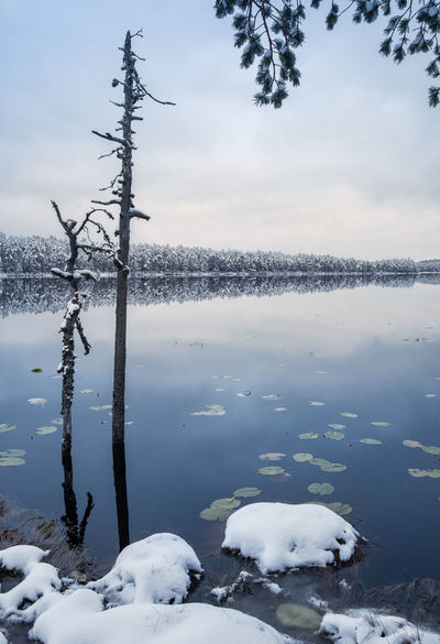 Scenic landscape with tree trunk and lake at winter evening in Finland Christmas Finland Moment Of Silence Nature Winter Atmospheric Mood Beauty In Nature Blue Cold Temperature Driftwood Lake Landscape Nature No People Outdoors Reflection Scenics Snow Tranquil Scene Tranquility Tree Trunk Water White Winter