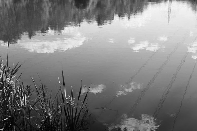 silence Winter Water Reflections Clouds Sky And Clouds Silence Sadness Melancholy Noir Blackandwhite Photography Black And White Monochrome Lucky's Monochrome Monoart Landscape Melancholic Landscapes Plant Tranquility Calm Mood Lucky's Mood Lucky's Memories Tranquil Scene Reflection Water Lake Nature Outdoors Beauty In Nature Growth High Angle View