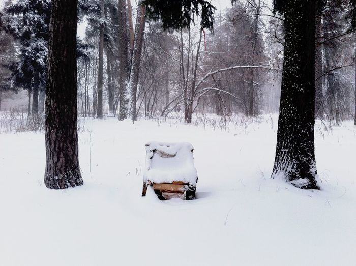 Furniture Trees Snow Forest Winter Wintertime Snow ❄